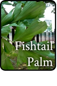 Fishtail-Palm