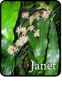 janet plant