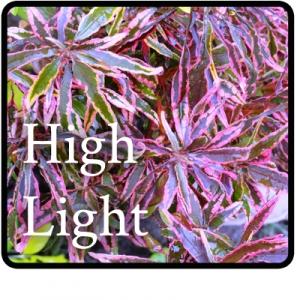high-light-Button