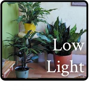 low-light-Button